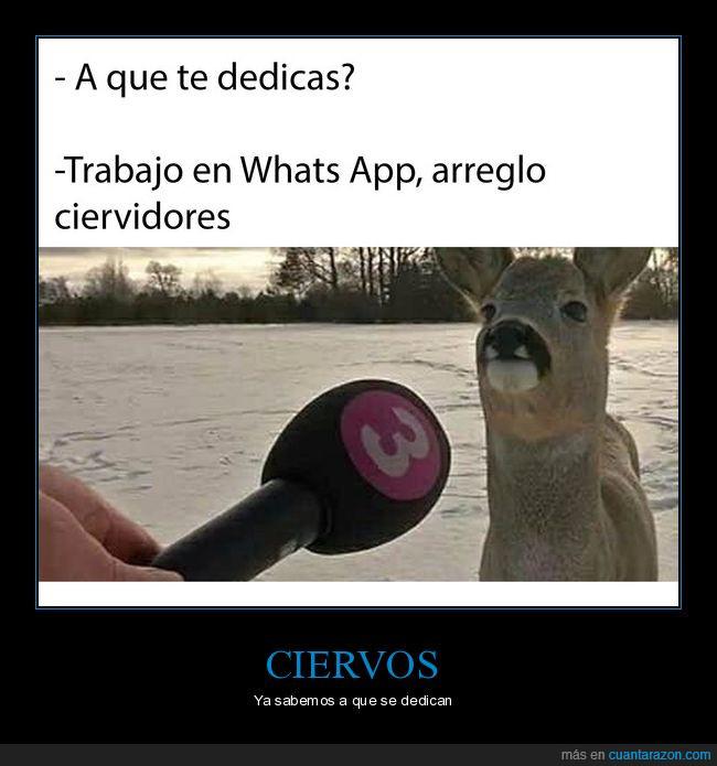 animales,caída,chistacos,ciervo,whatsapp