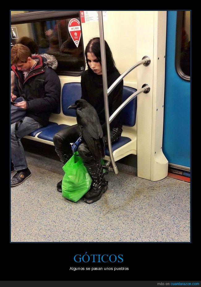 bolsa,cuervo,gótico,negro,oscuro,tren