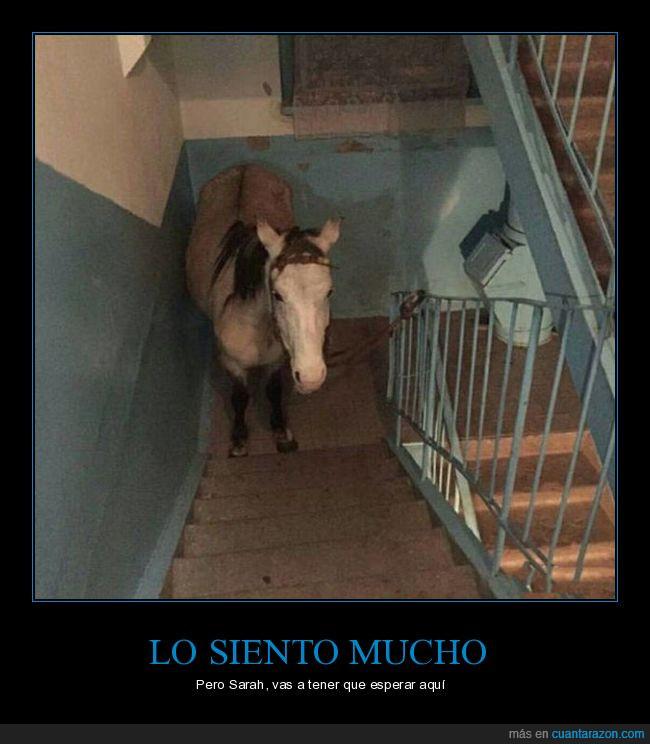 aparcao,caballo,escaleras,sarah jessica parker