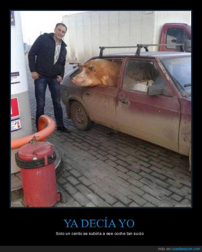 cerdo,coche,foto,gasolinera,suciedad