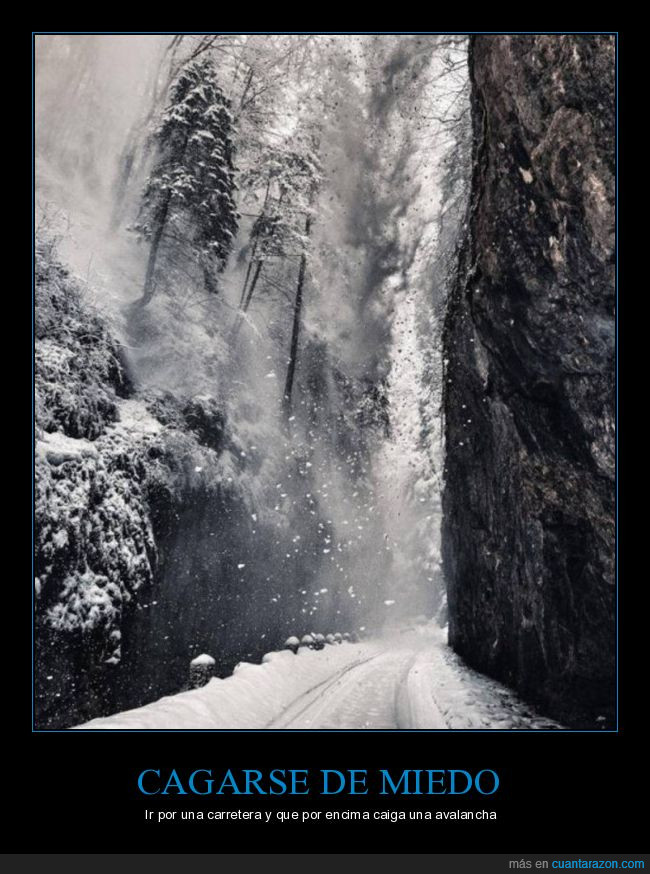 árbol,avalancha,miedo,nieve,Rumanía
