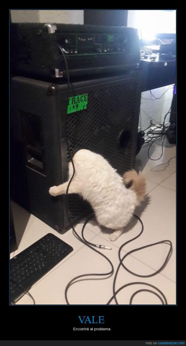 conector,Gato,pc,problema,teclado