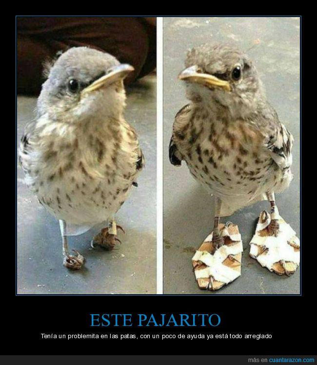 arreglo,cartón,celo,pájaro,patas,problema