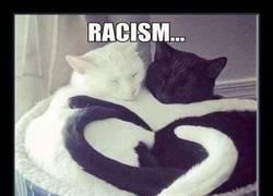 Enlace a ¿Seguro que el racismo solo es cosa de humanos?