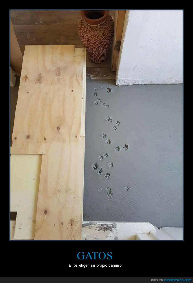 camino,cemento,gatos,huellas,no pisar,pisadas
