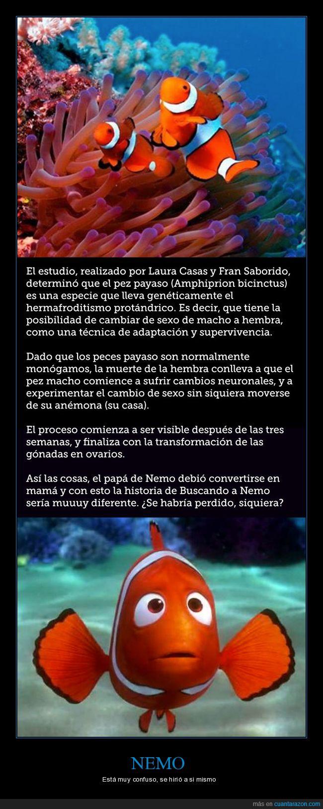 hermafrodito,nemo,pez payaso