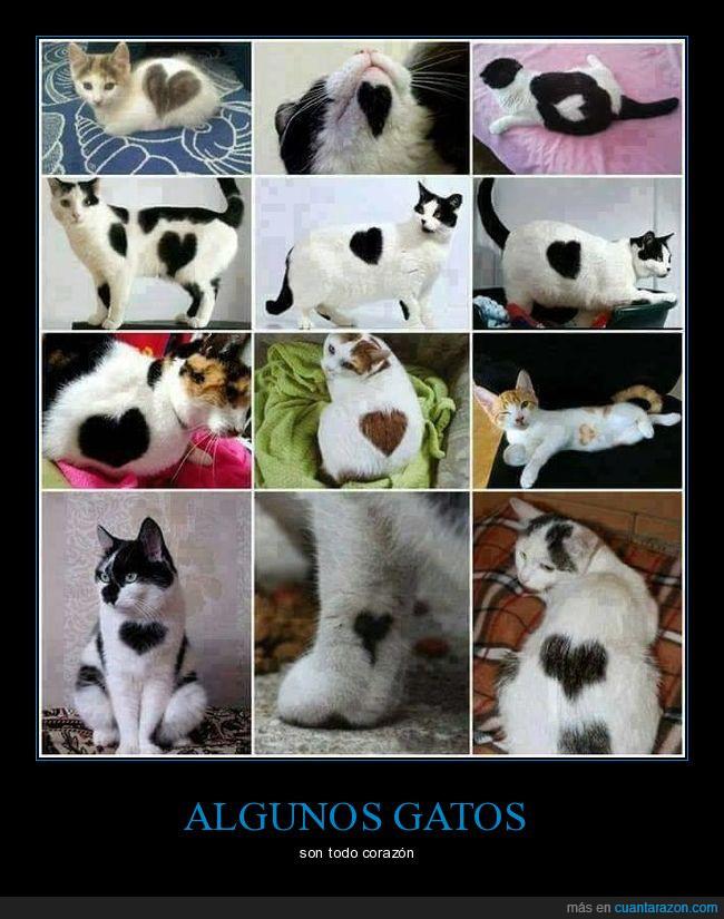 corazón,forma,gatos,pelaje
