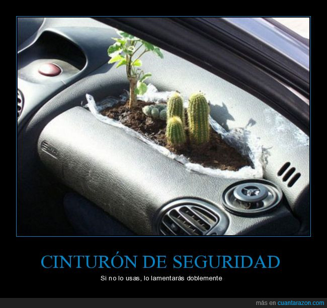 auto,cactus,coche,salpicadero