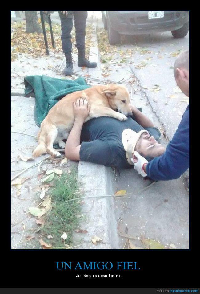 accidente,amistar,amor puro,inconciente,perro