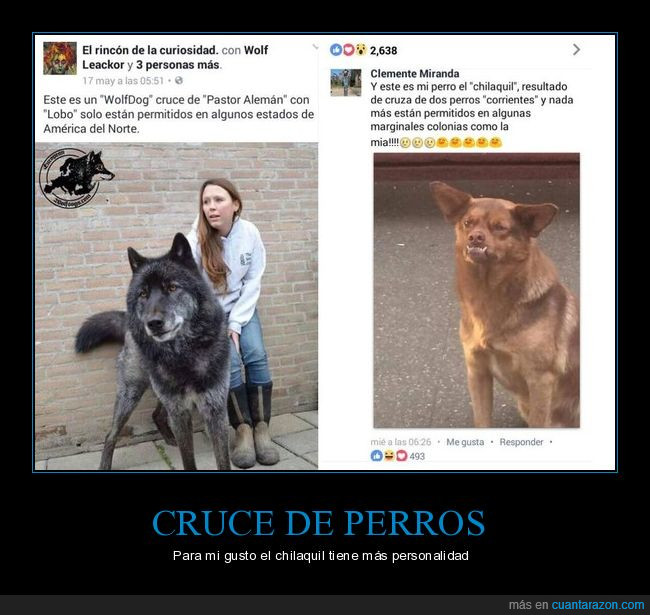 can,cruces,perros