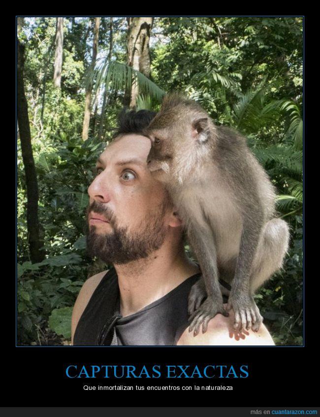 captura,el mono se mea en su hombro,foto,hombre,meo,mono