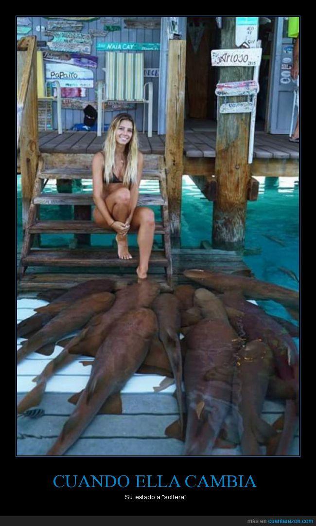 acecho,peces,Soltera,tía,todos
