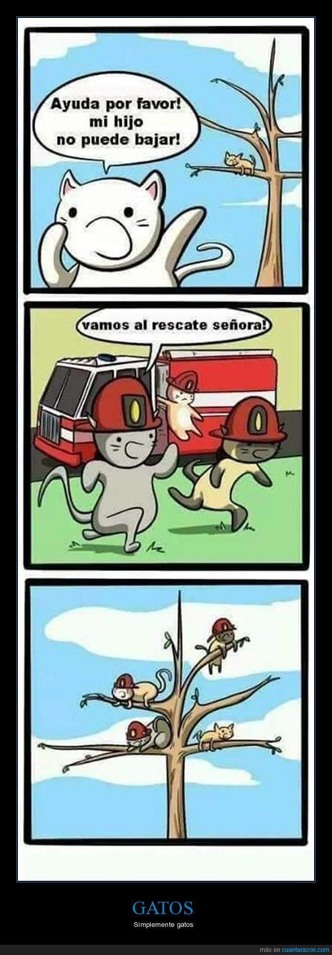 arbol,ayuda,bombero,gatos,grrr,hijo,madre,miau,rescate,rwar