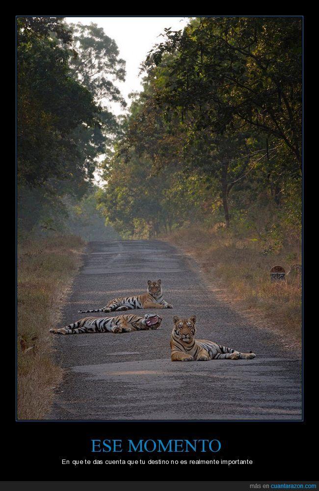 camino,carretera,tigres