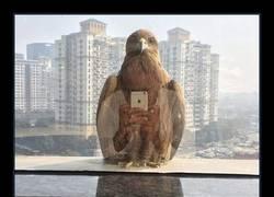 Enlace a Cuando una águila se hace un selfie