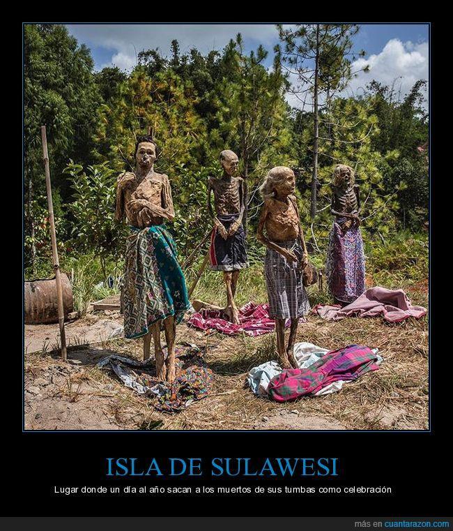 año,celebración,día,fuera,Indonesia,muertos,sacan,sulawesi,tumba