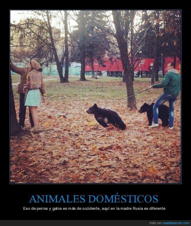 animal doméstico,gato,Madre Patria,occidente,osos,paseo,perro,Rusia