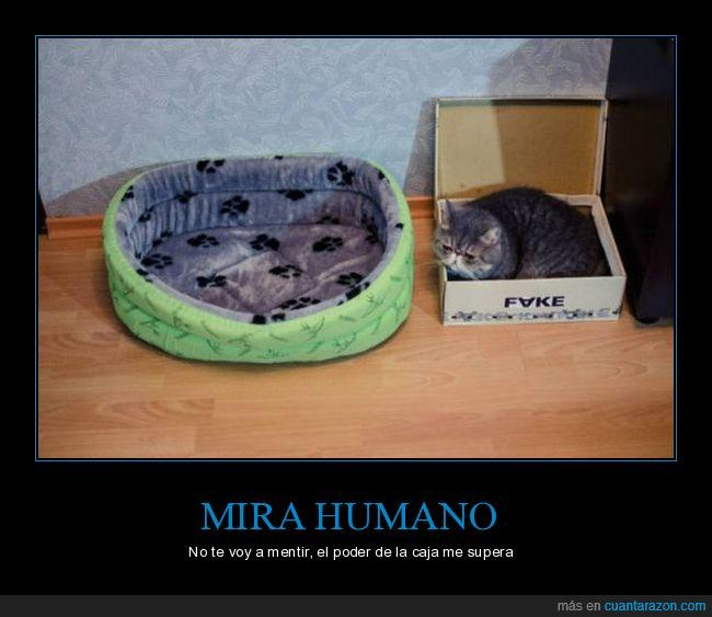 caja,cama,casa,dinero,fake,gato,humano