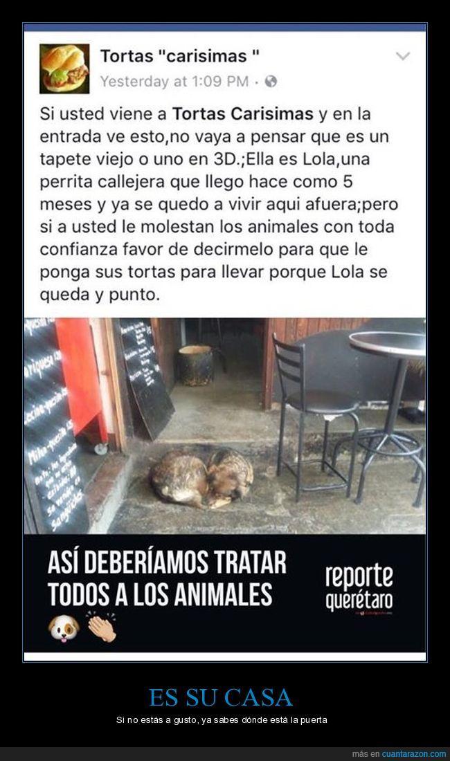perra,Queretaro,Restaurante,tortas
