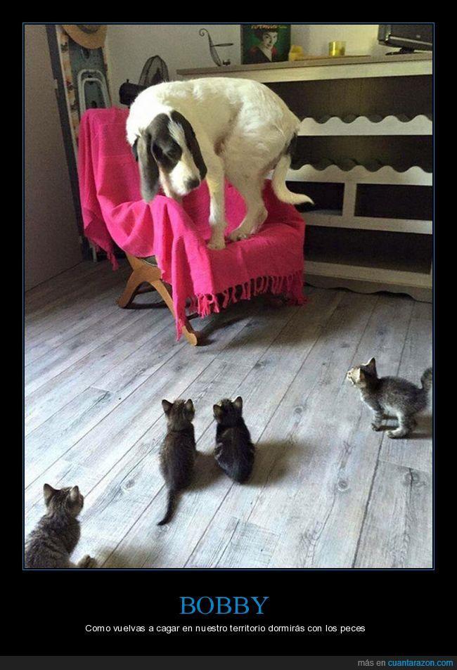 amenaza,gatitos,gato,manta,miedo,peces,perro,silla,territorio