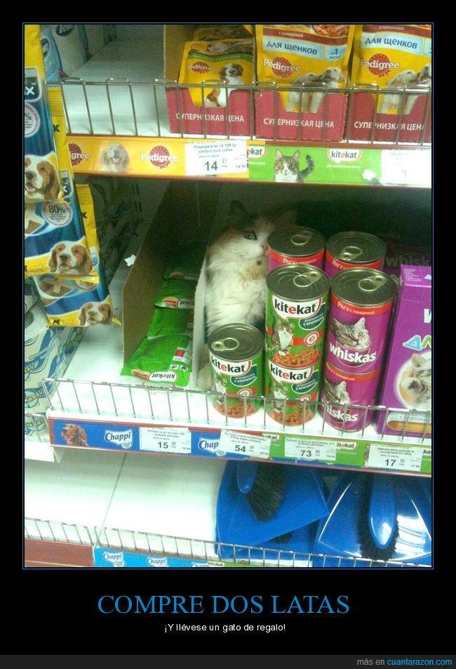 comida,gato,latas,supermercado
