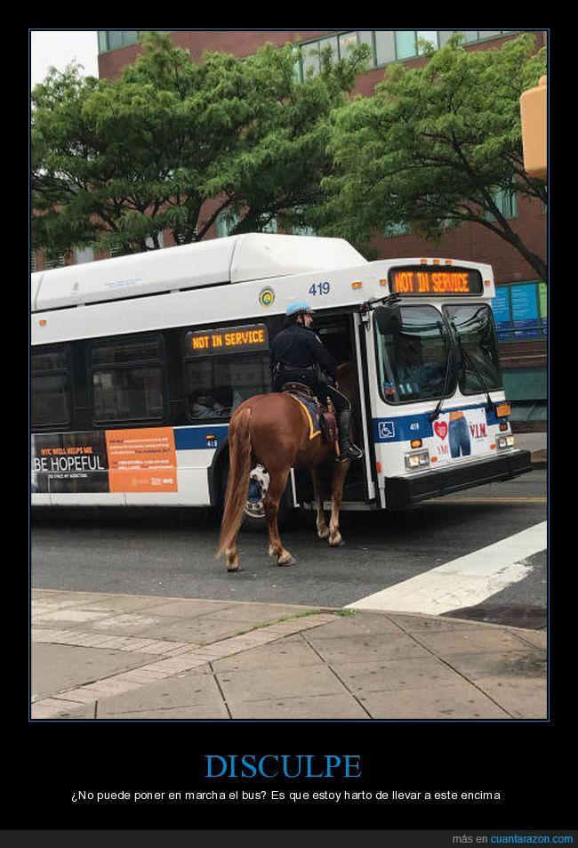 autobús,caballo,fuera de servicio,montar