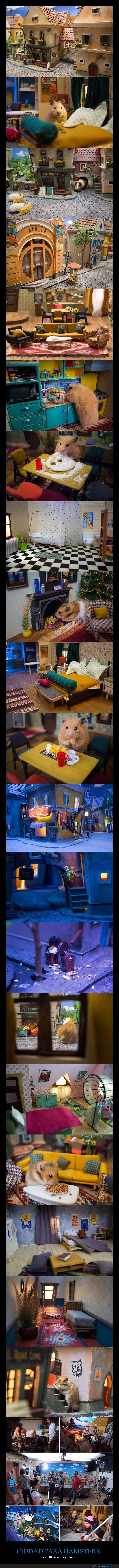 casitas,ciudad,hamsters