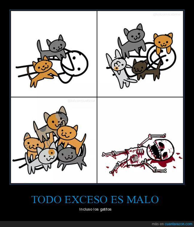 carnívoros,exceso,gatitos,matar