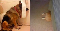 Enlace a 19 Perros que piensan que están muy bien escondidos