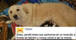 Enlace a Daisy la perra que ha demostrado tener más sentimientos que muchos humanos
