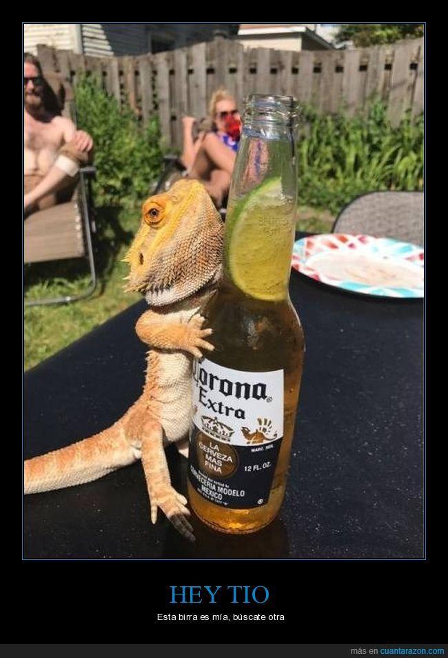 birra,cerveza,lagarto
