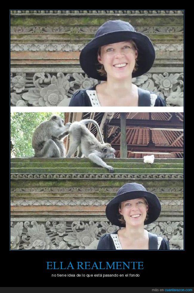espulgar,foto,macacos