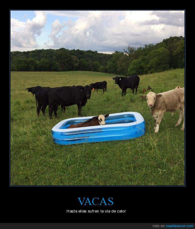 inflable,llevarse,piscina,tormenta,vacas,volar