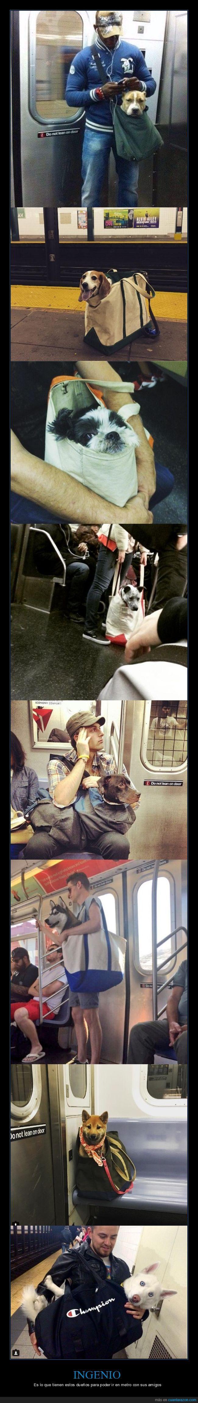 bolsa,metro,perro