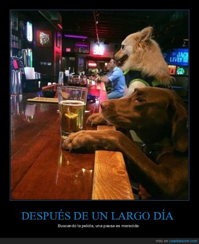 barra,birra,cerveza,merecida,perro