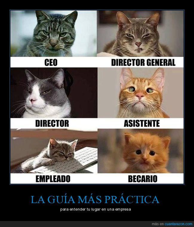 empresas,gatos