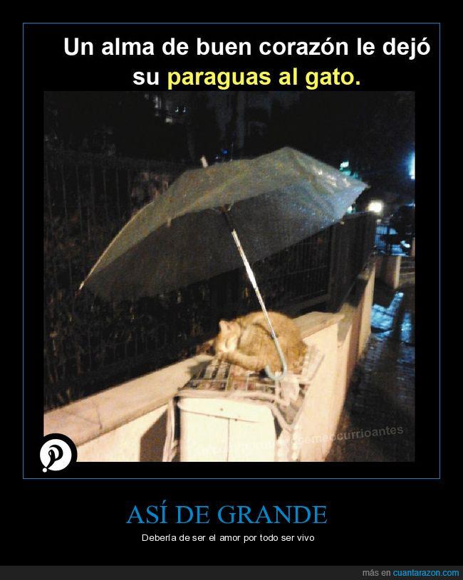 gato,lluvia,paraguas