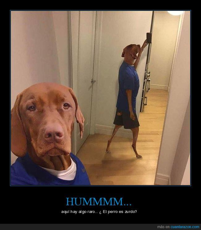 can,cartel,humor,ojos,perro,selfie