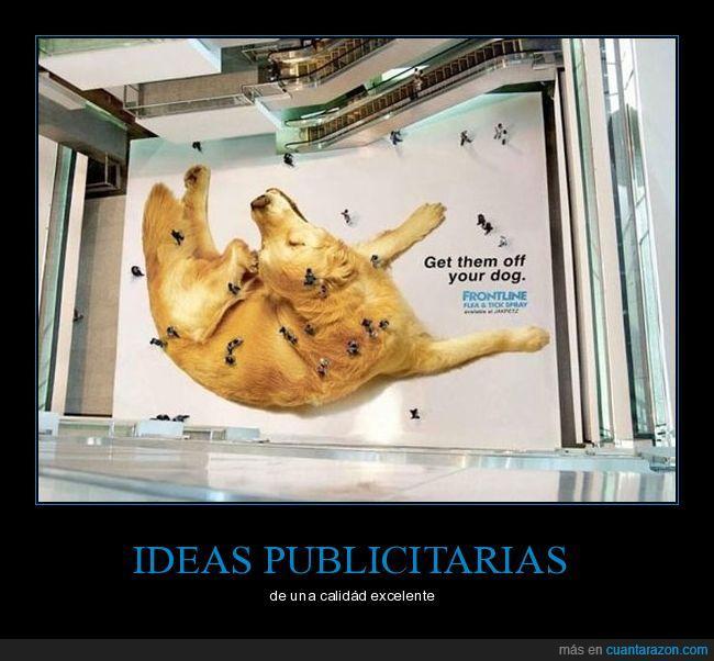 aérea,anuncio,humanos,perro,publicidad,pulgas