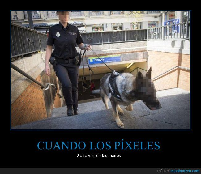fotos,perro,pixelar,policía
