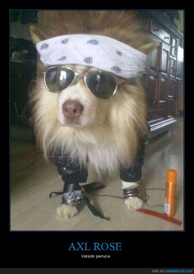 axl rose,guns n roses,perro,rockero