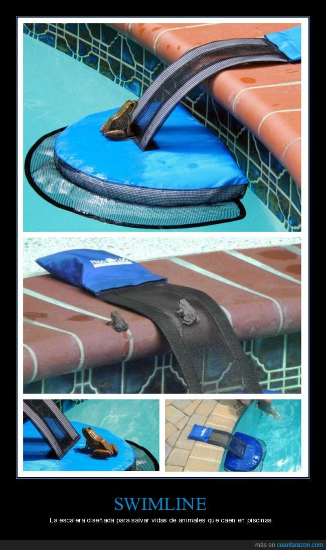 agua,escalera,piscina,rana,swimline