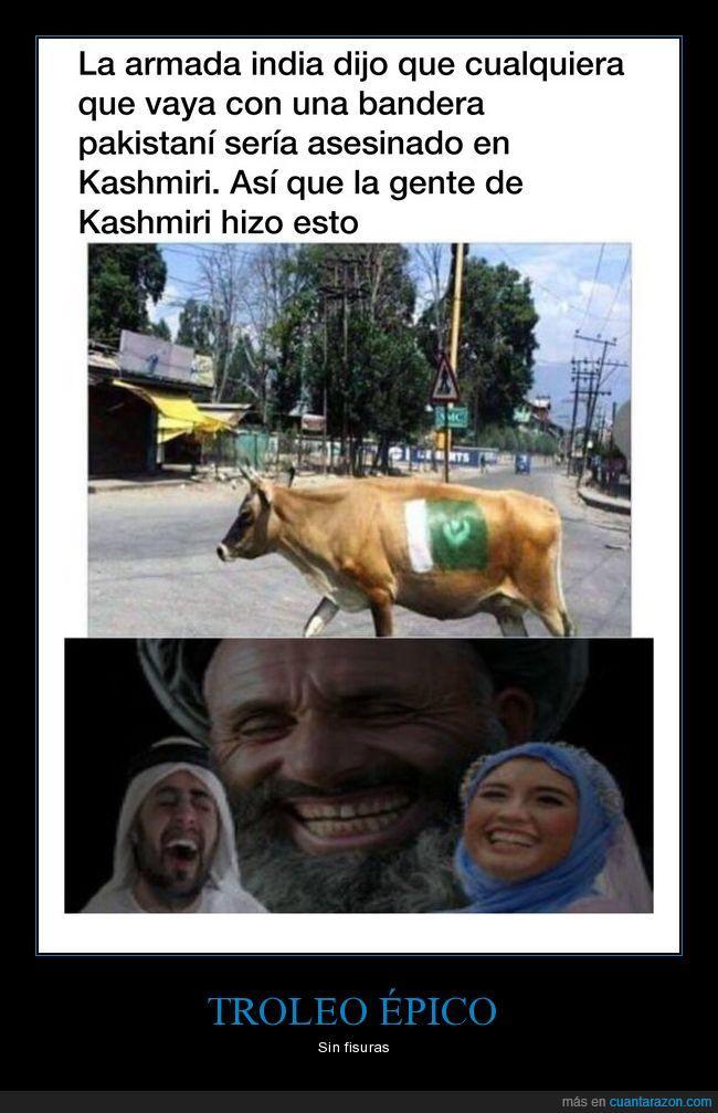 bandera,kashmiri,pakistan,troleo,vacas