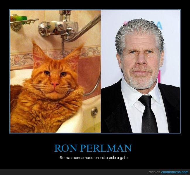 clavado,gato,Ron Perlman