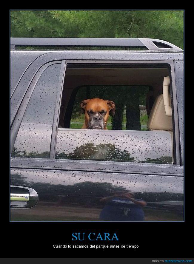 coche,mala leche,perro