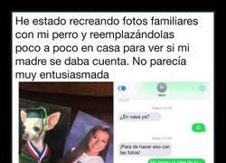 Enlace a Recrea y reemplaza las fotos familiares por fotos de su perra hasta que su madre se da cuenta