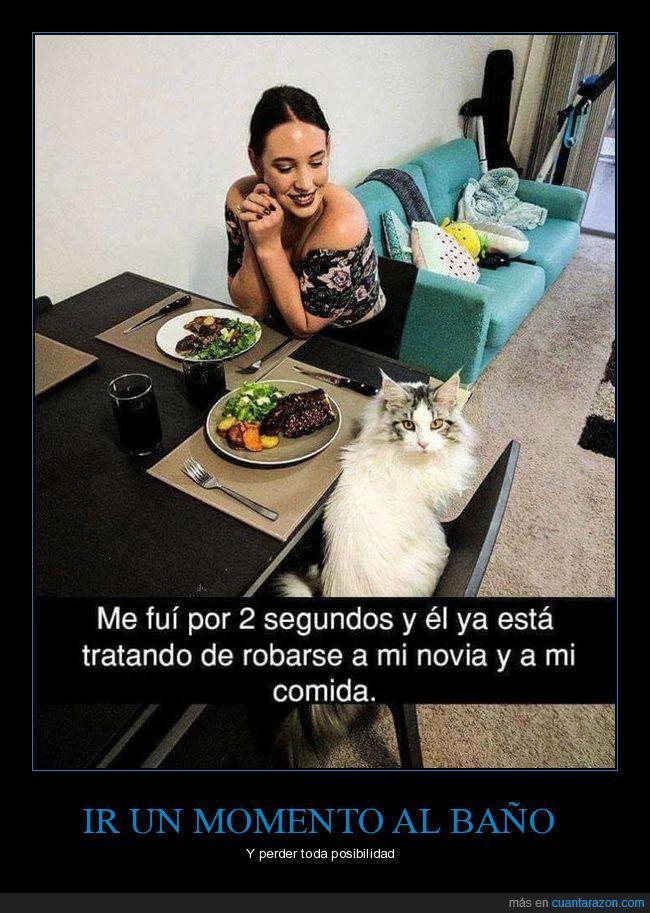 comer,comida,gato,mesa,restaurante
