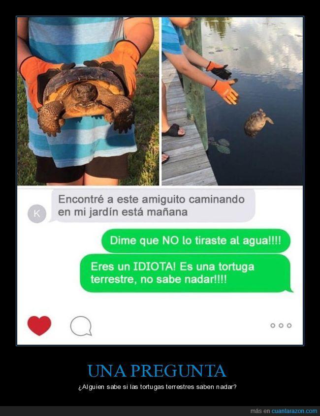 mar,nadar,terrestre,tortugas