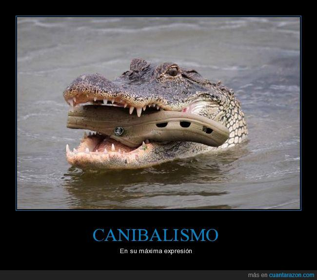 canibalismo,cocodrilo,crocs