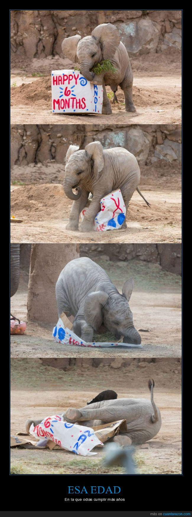 cumpleaños,cumplir,elefante,enfadado